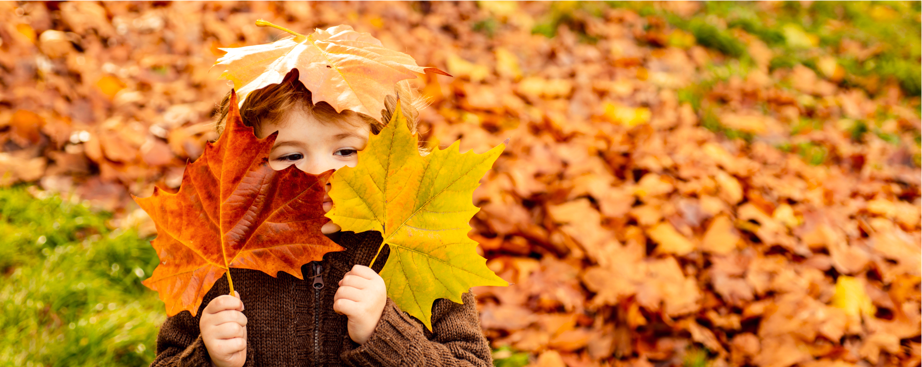 Autumn Leaves & Learning Opportunities 1